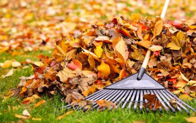 L'importanza dell'autunno
